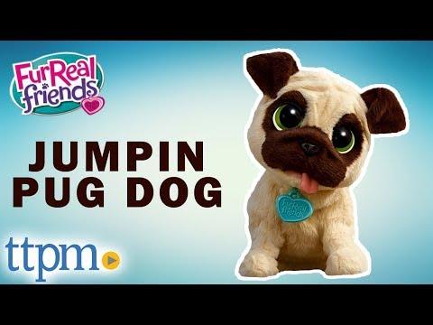 FurReal Friends J.J. My Jumpin Pug Dog - Instructions And Demo | Hasbro Pet Toys