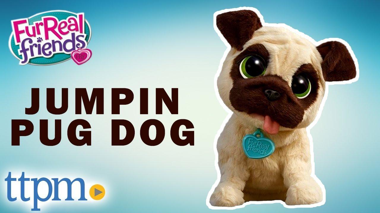 Realistic Pug Stuffed Animal, Furreal Friends J J My Jumpin Pug Dog Instructions And Demo Hasbro Pet Toys Youtube