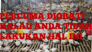 Lakukan Hal Ini Sebelum Anda Mengobati Penyakit Ayam Broiler