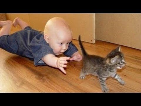 Quand les Chats et Bébés s'amusent ensemble