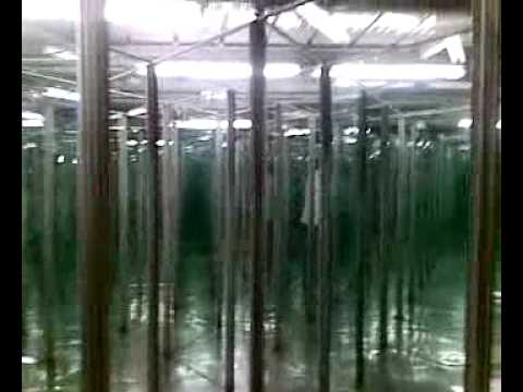 La casa degli specchi youtube - Specchi in casa ...