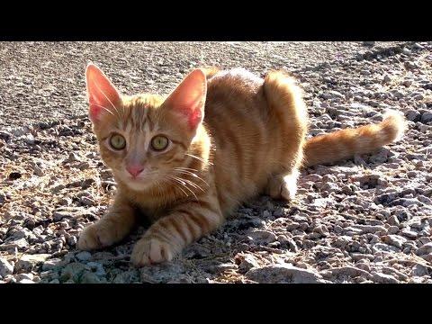 Los gatos son seres mágicos (cuentos y leyendas) - Julia Pons Montoro