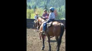 Horsemanship Training, Boarding And Petting Zoo In Maple Ridge