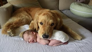 Cute dog babysitting dog love baby   Cute baby video   Funny Animals and Babies Compilation