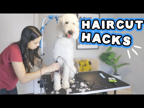 Grooming at ? WATCH! Goldendoodle FULL trim & bath during lockdown