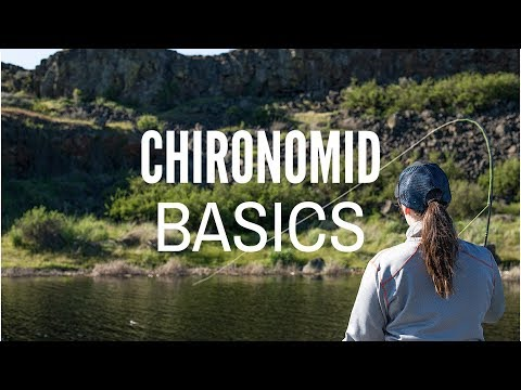 Chironomid Fly Fishing Basics