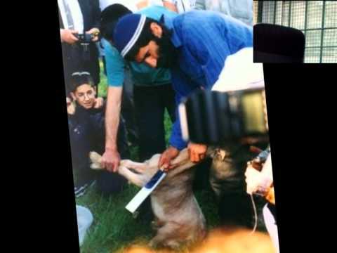 Animals Sacrifices Israel Today