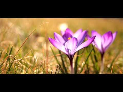 Meditation Music Violin- Sahaja Yoga