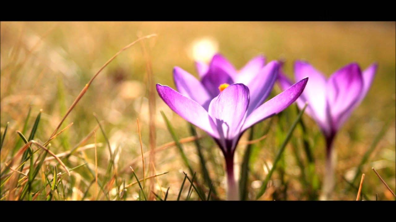 Meditation Music Violin Sahaja Yoga Youtube
