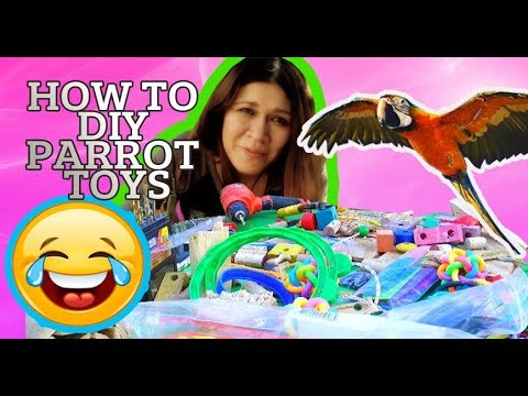 I am making DIY Parrot Toys