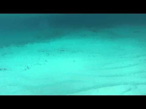 Underwater Swimming at the beach Atlantis the Bahamas