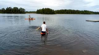 Ruby zwemt in Zweedse wateren