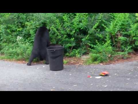 Bear Proof Garbage Cans 101