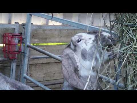 Goat Shed February