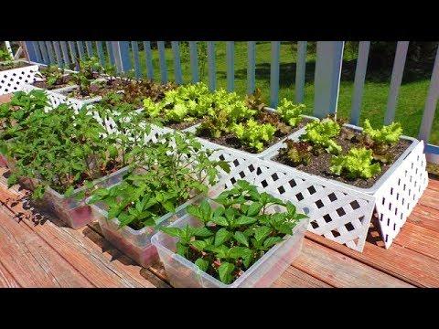 Vegetable Seeds Gardening Tomato