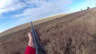 North Dakota Pheasant Hunting 2012 Dog Work