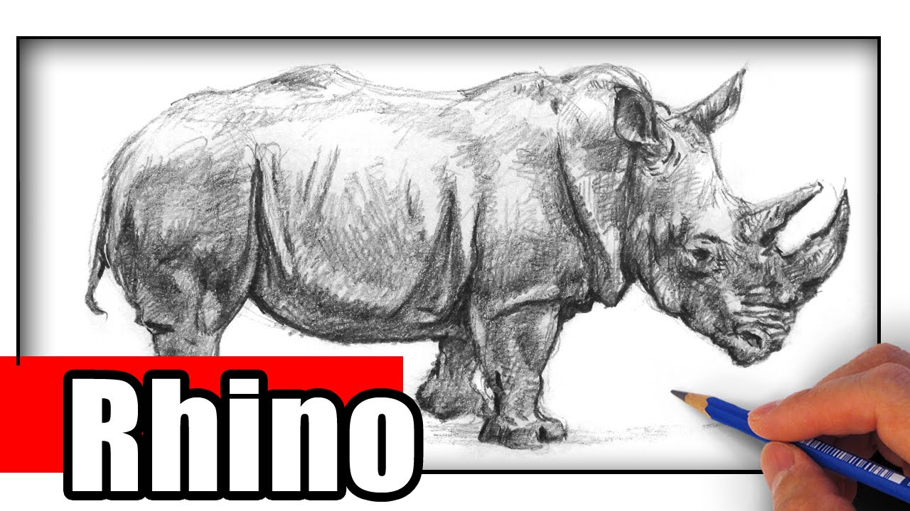 How to draw a rhino youtube ccuart Gallery