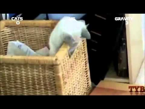 Смешное видео про животных - Смешное видео