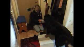 2013-02-07 04.Matte har kommit hem till Baloo.avi