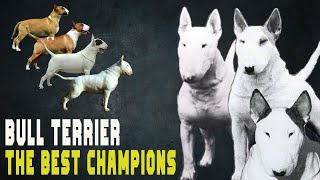 THE BEST BULL TERRIER CHAMPIONS OF ALL TIME