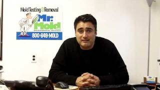 Mr Mold TV Episode 3: Toxic Mold vs Allergenic Molds