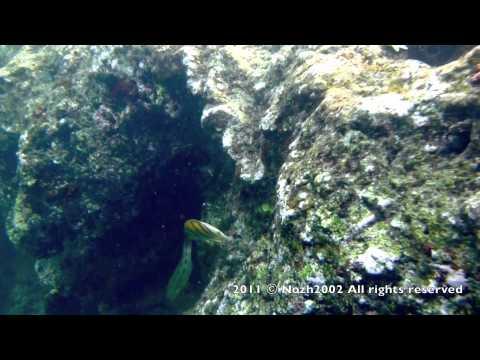 Hawaii Kauai  Queen's Bath Tropical Fish