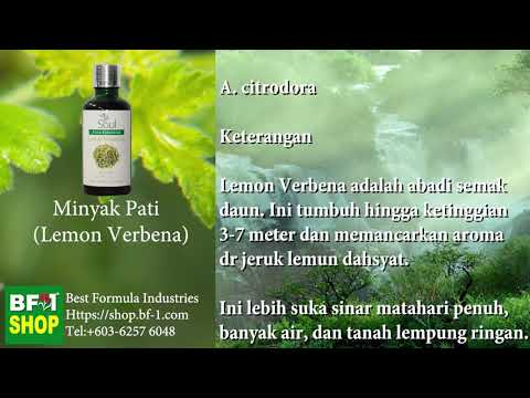 Pati Minyak Wangi Aromatik - Lemon Verbena (Lemon Verabana)