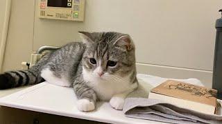 飼い主の入浴中ひとりぼっちになるのが耐えられずお風呂に居座る猫!