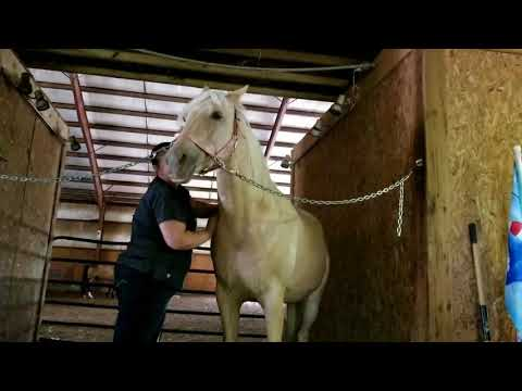 Laura Dietrich equine