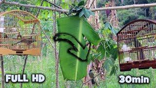 30min | Melhor VÍDEO para ESQUENTAR Trinca Ferro | DISPUTA no MATO (( Negão vs Bolsonaro)) FULL HD