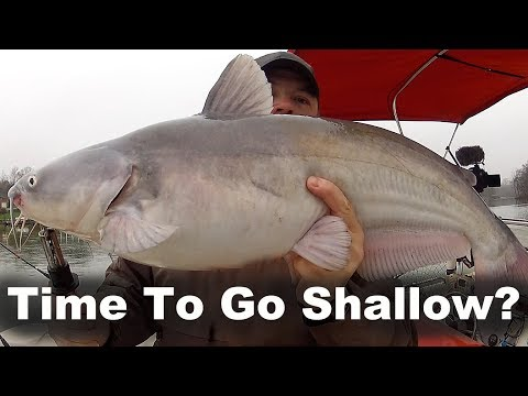 Fishing Shallow For Blue Cats - Fishing For Blue Catfish Shallow Water