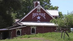 Late Spring Red Mule Ranch