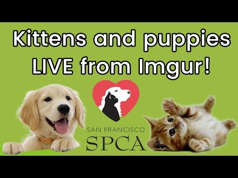 Kittens & Puppies Live from Imgur!