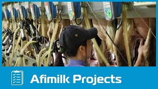 Afimilk – TH Milk Vietnam - Outstanding Dairy Farm Project