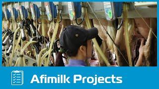 Afimilk – TH Milk Vietnam - Outstanding Dairy Farm Project