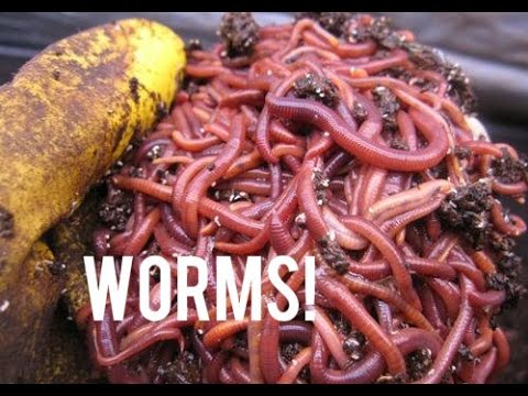 How to Set Up a Home Made Worm Farm!