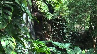 Relax with RAINFOREST IMPRESSIONS - 01 MAJESTIC GREEN (PURERELAX.TV)