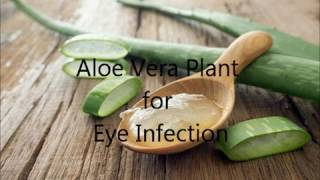 Aloe vera for eye infections