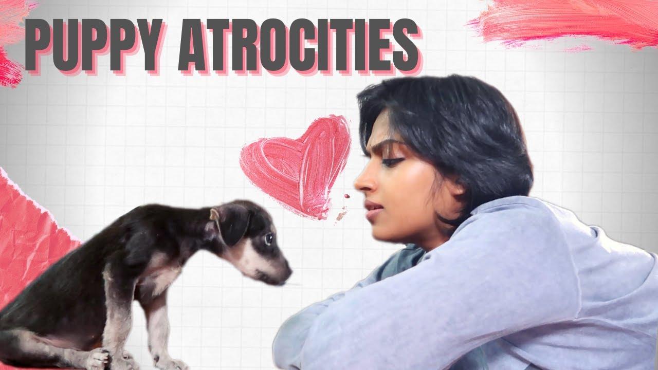 Puppy Atrocities    Dog Vs Mom    Pori Urundai