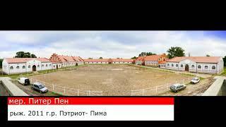 Мерин Питер Пен