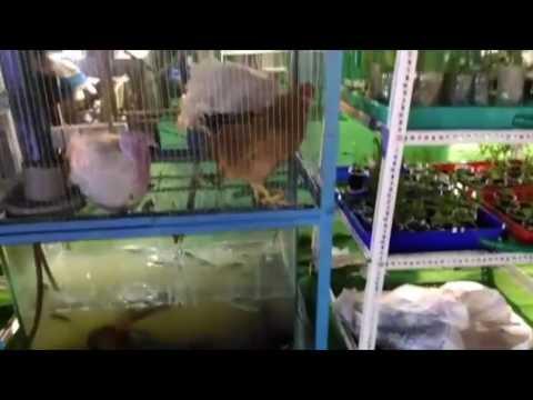 TONA Organic Farm –VERTICAL FARMING