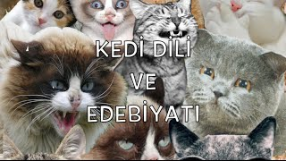 Kedi Dili ve Edebiyatı | My Sweety and Funny Cat