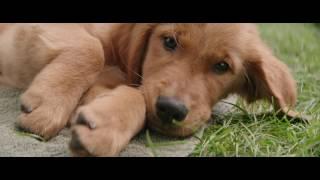 Трейлер Собачья жизнь