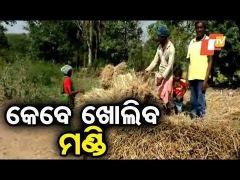 Farmers In Distress Over Absence Of Rice Mandi In Rayagada