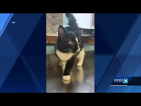 ARL Of Iowa, Des Moines Police Investigate After Cat Left In Luggage