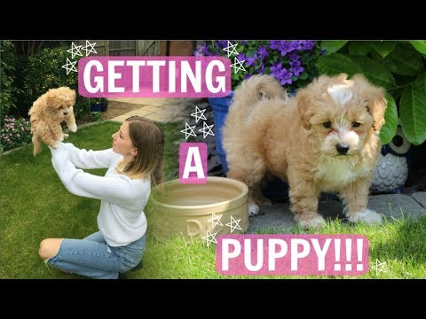 WE GOT A PUPPY!!!! VLOG: Picking up our Maltipoo puppy