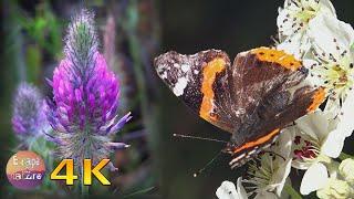 Spring wildflowers - Nightingale song - Super bloom flowers - Relaxing Spring sounds - 4K video