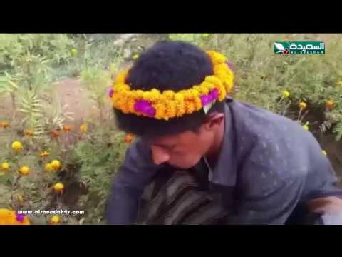 تقرير : زراعة الورود في حجة (19-1-2018)