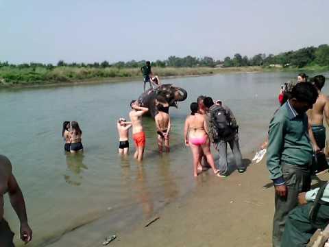 Elephant bath in Chitwan at River rapti