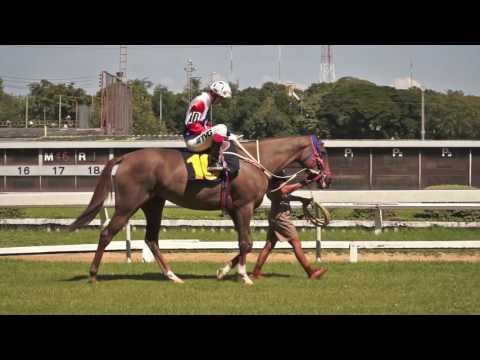 ม้าแข่งสนามไทย วันอาทิตย์ที่ 27 พฤศจิกายน 59 เที่ยว 1 ม้าชั้นเมเด้น